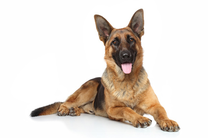 What Is The Best Dog Food For A German Shepherd