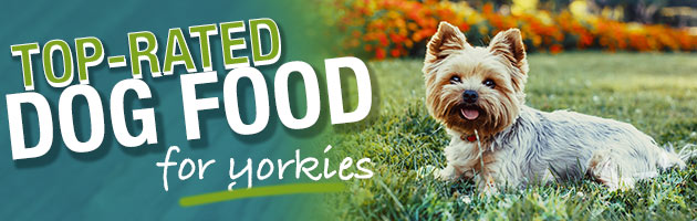 What Is The Best Dog Food For A Yorkie