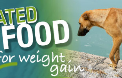 Best Dog Food For Weight Gain