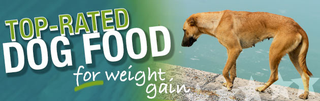 dog food to gain weight