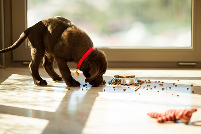 Nature S Logic Small Breed Puppy Food