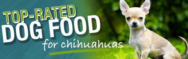 What Is The Best Dog Food For A Chihuahua