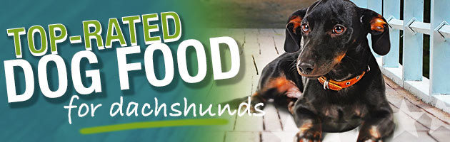 Best Dog Food For Dachshunds Ultimate Buyer S Guide