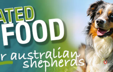 Best Dog Food For Australian Shepherds