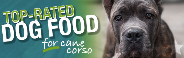 Best Dog Food For Cane Corso Ultimate Buyer S Guide