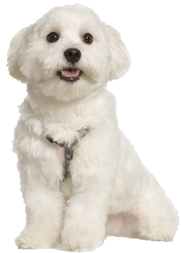 What Is The Best Dog Food For A Maltese
