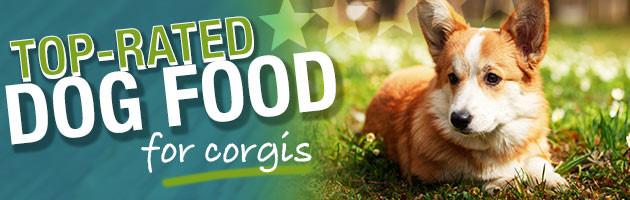 Best Dog Food For Welsh Pembroke Corgis