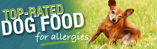 What Is The Best Dog Food For Dogs With Allergies