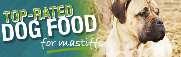 Best Dog Food For a Mastiff - Puppies, Adults & Senior Dogs