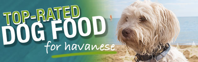 What Is The Best Dog Food For Havanese