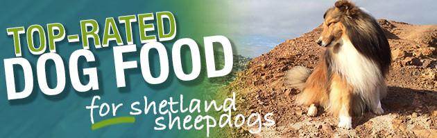 Best Dog Food For Shetland Sheepdogs