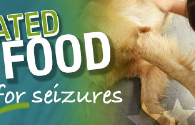 Best Dog Food For Seizures and Epilepsy