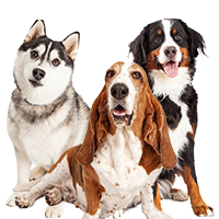 What Is The Best Dog Food For Medium Breed Dogs