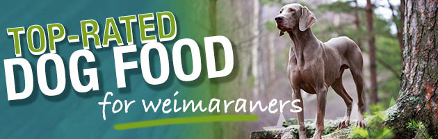 Best Dog Food For Weimaraners