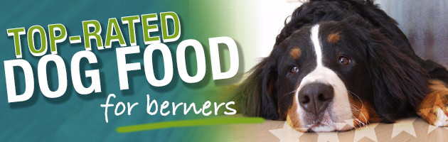 Best Dog Food For Bernese Mountain Dogs