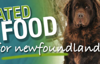 Best Dog Food For Newfoundlands