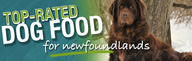 Best Dog Food For Newfoundlands