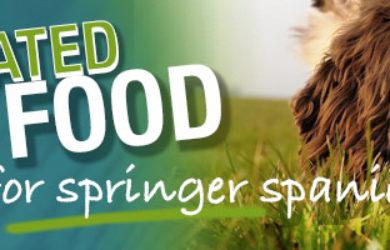 Best Dog Food For English Springer Spaniels