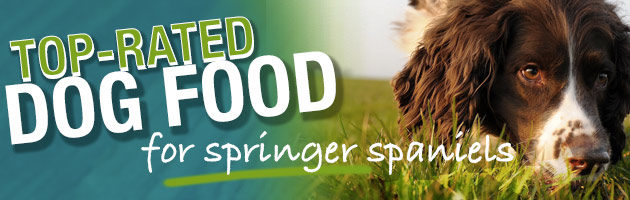 What is the Best Dog Food For an English Springer Spaniel?