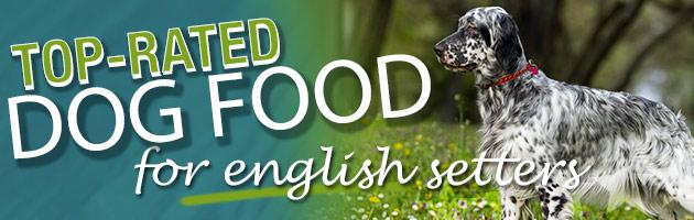 Best Dog Food for an English Setter | Dog Food Guru