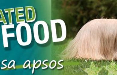 Best Dog Food Lhasa Apso
