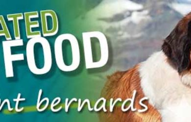 best-dog-food-saint-bernard