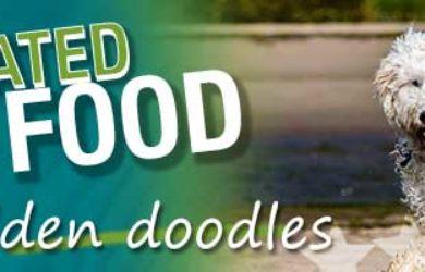 best golden doodle food feature