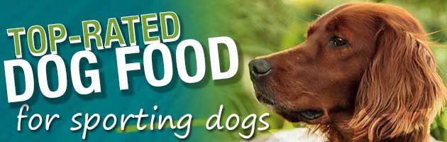 Best Dog Food Sporting Dog