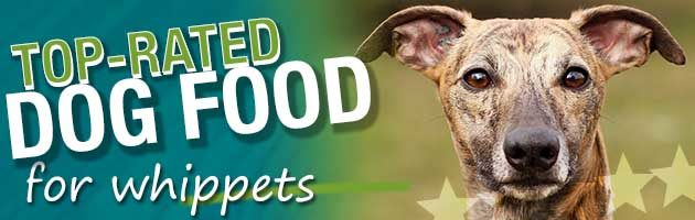 Best Dog Food Whippets
