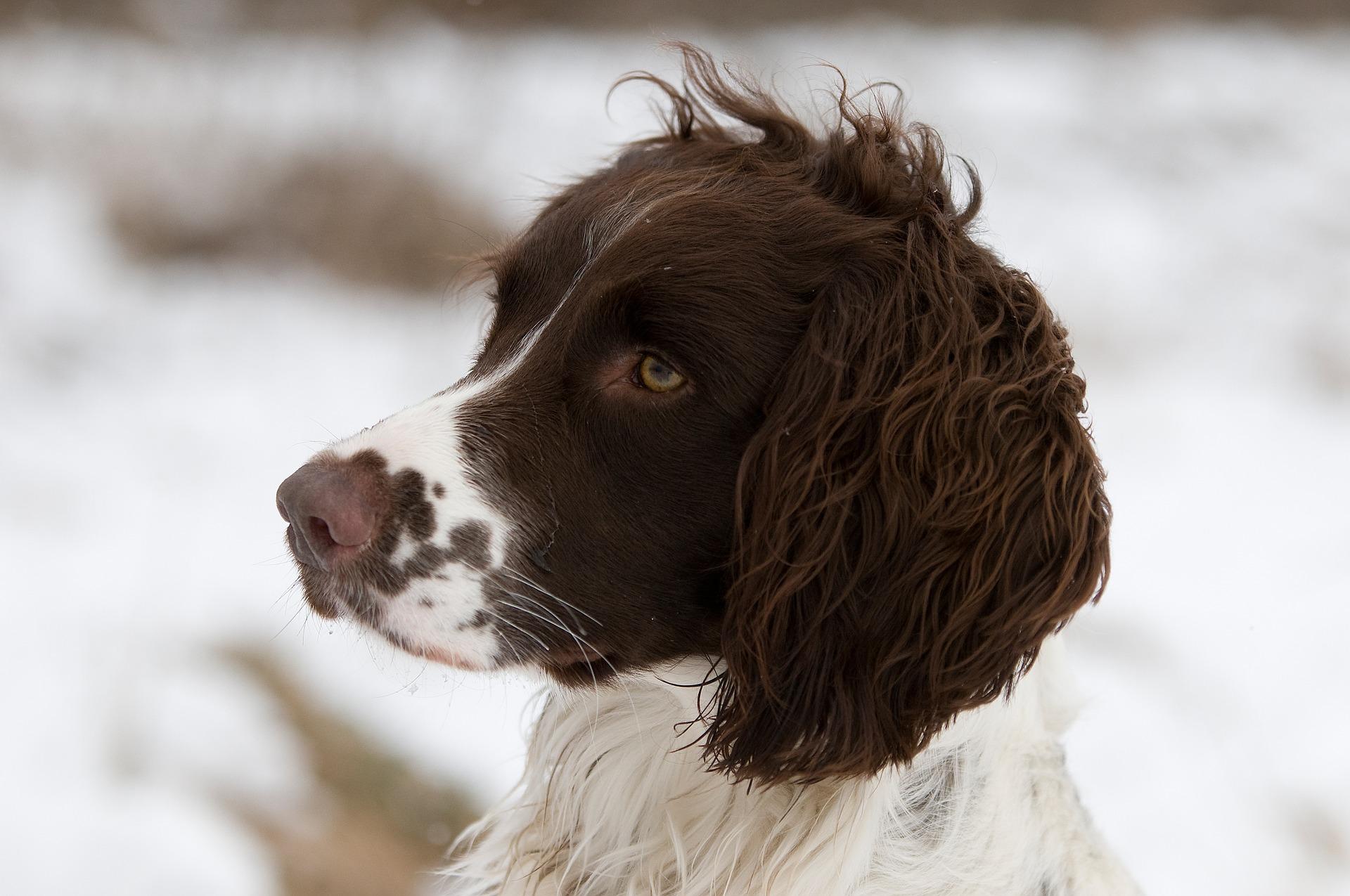 best dog food sporting dog retriever