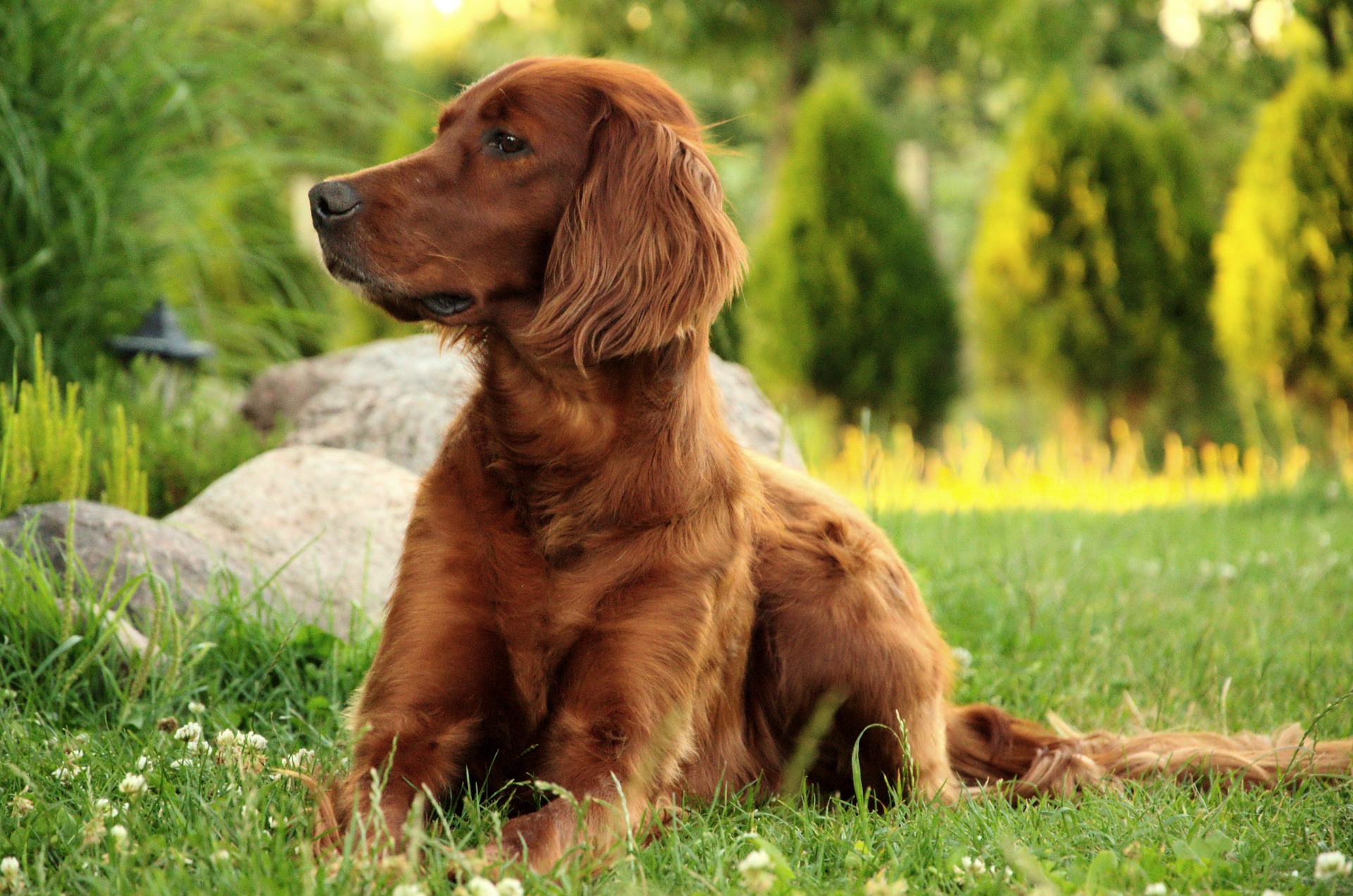 best dog food sporting dog spaniel