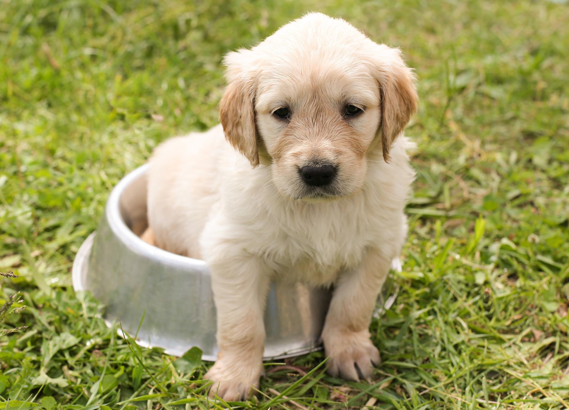 best dog food sporting dog puppy