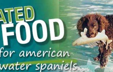best dog food american water spaniel