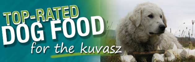 best dog food kuvasz