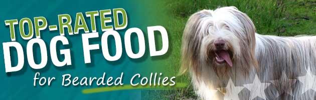Best Dog Food For A Senior Collie