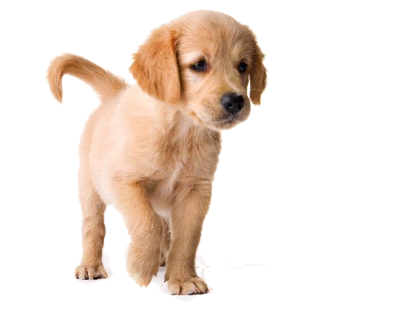 What Is The Best Dog Food For A Golden Retriever