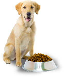 What Is The Best Dog Food for a Golden Retriever? | Golden Retriever Food | Dogfood.guru