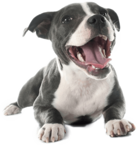 What Is The Best Dog Food for a Pitbull? | Pitbull Puppy | Dogfood.guru