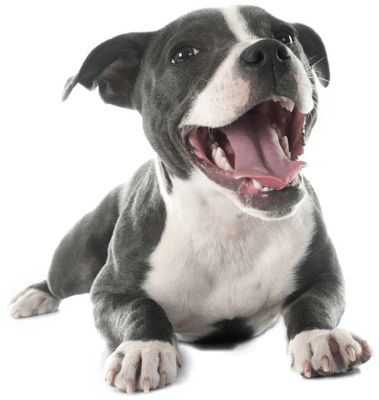 Best Dog Food For Pitbulls Ultimate Buyer S Guide