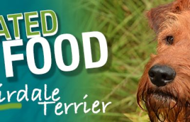 The Ultimate Airdale Terrier Buyer's Guide | Airdale Terrier | Dogfood.guru