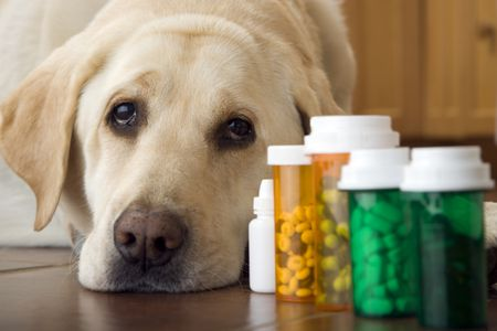 Supplements for Dogs: The Upsides and the Risks | Dog and Supplements | Dogfood.guru