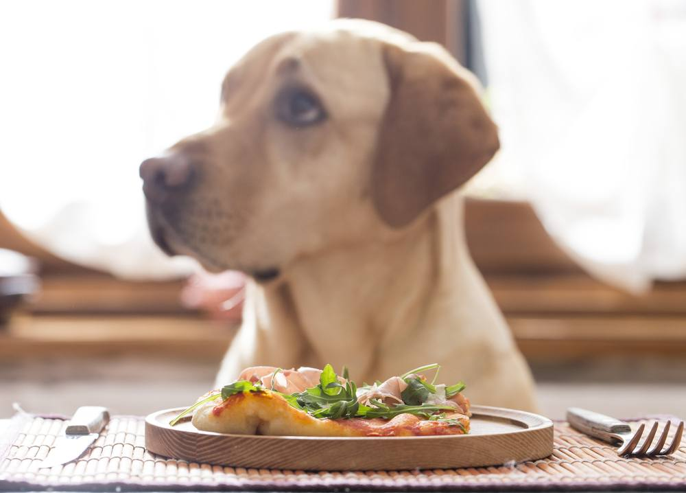 10 Best Gourmet Dog Food Recipes for a Healthy Dog | Feature | FastFoodMenuPrices.com