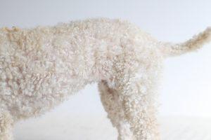 Poodle Fur